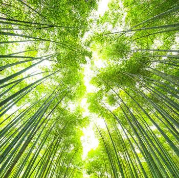 Environmental Law <span>Damon R. Sedita</span>